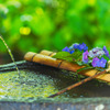 紫陽花と手水舎