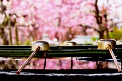 梅と手水舎