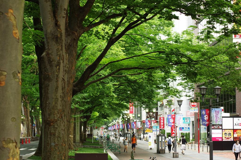 府中・駅前の欅並木(1)@50mm