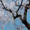 小江戸の春3