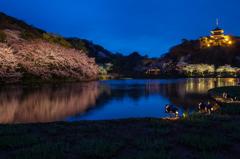 三渓園の夜桜4
