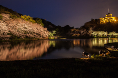 三渓園の夜桜6