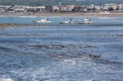 春の鎌倉海岸