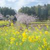春色の汽車1