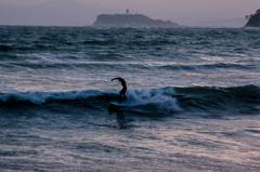夕波のサーファー
