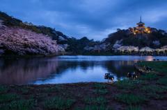 三渓園の夜桜1