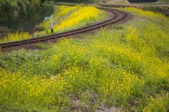 春色の汽車4