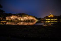 三渓園の夜桜5