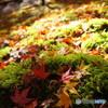 苔と紅葉と