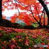 雨に湿った紅葉
