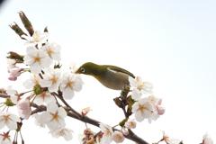 おいしい春