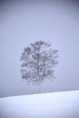 風雪に立つ