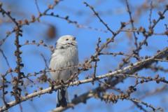 幸せの白い鳥