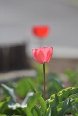 花撮り爺さん