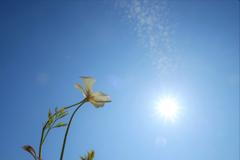 西陽を浴びて