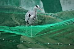 網の上の鳥