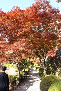 紅葉をゆく