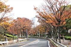 秋の散歩道 色ずき頃