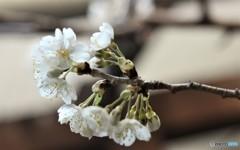 春OF会のおさそい