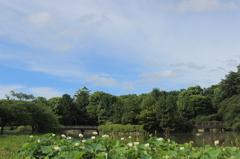 ハス池、名古屋城