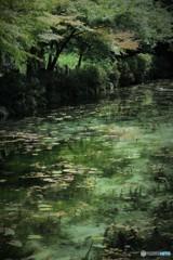 モネの池 2