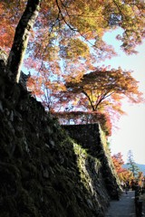 八幡城の秋 #1