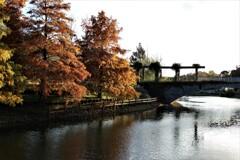 秋深まる パート2