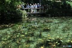 なもなき池 #2