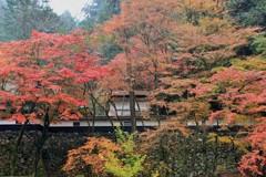秋 横蔵寺 2