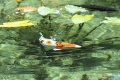 なもなき池 #4