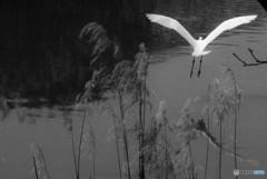 名城のお堀 鳥