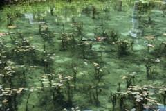 モネの池 3