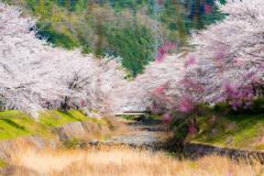 七谷川沿いの風景3