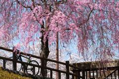 七谷川沿いの風景4