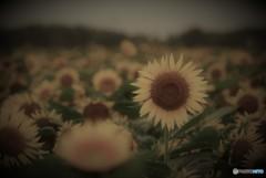 Memory of summer♪