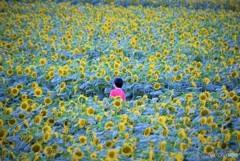 ひまわり畑の少女♪