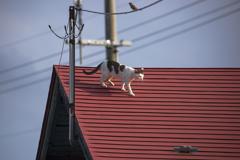 屋根の上のアニー