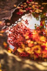 映りこんだ秋