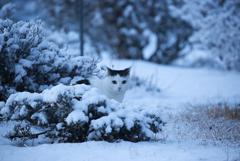 ♫猫はコタツで丸くな、、、らない