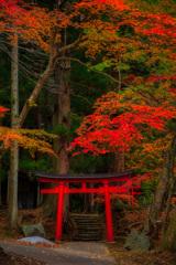 鳥居と紅葉