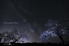 夜桜リトライⅠ