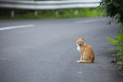 山道にいた猫