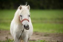 道端にいた馬...