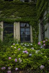 紫陽花と廃墟
