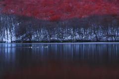 冬の沼とSwan