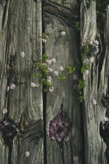 桜散るベンチ