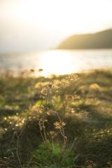 朝陽を浴びるお花