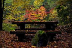 紅葉を眺める場所