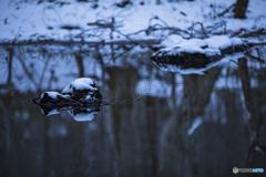 冬のリフレクション