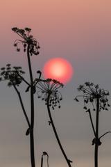 お花と朝陽
